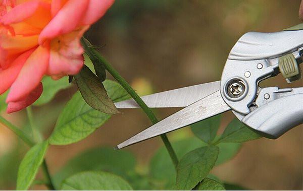 Gartenzubehör 1037 Blumenschere Schere Edelstahlkinge Garten NEU